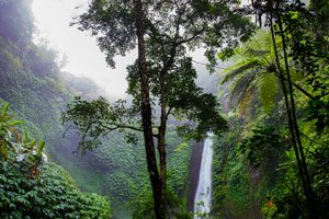 rainforest with waterfall